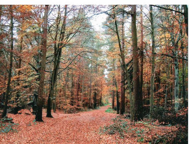 Thetford-forest.jpg