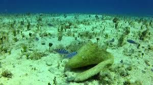 chalk reef.jpg